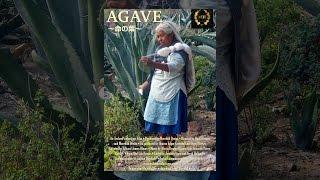 AGAVE ~命の葉~