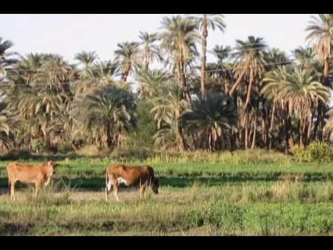 from depth of egyptain vallage من اعماق الريف المصرى
