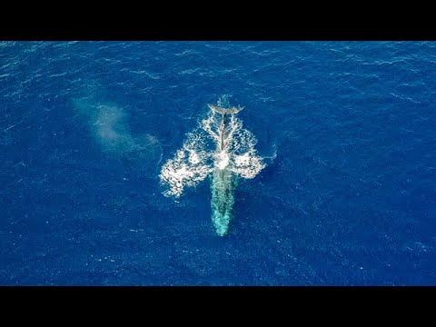 Did Unprecedented Leviathan Appearance Off Eilat Signal