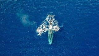 news - לוויתן כחול באילת