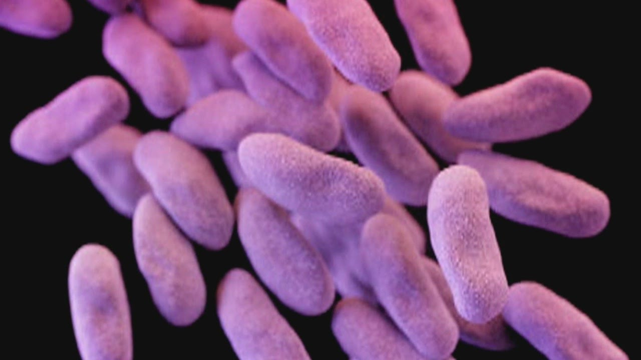 Good Question: Where Do Superbugs Come From?