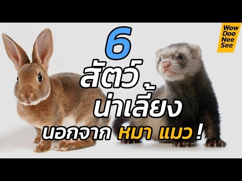 6 สัตว์น่าเลี้ยง ที่ไม่ใช่ สุนัข แมว !! เลี้ยงได้ด้วยเหรอ? #WowDooNeeSee