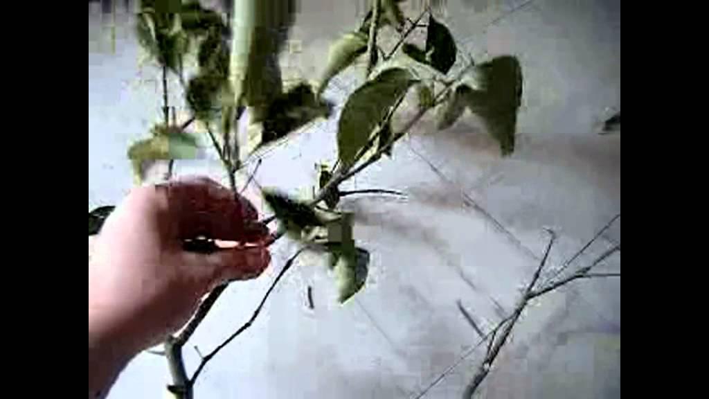 Decoraci n hacer un arreglo con ramas secas youtube - Centros de mesa con pinas secas ...