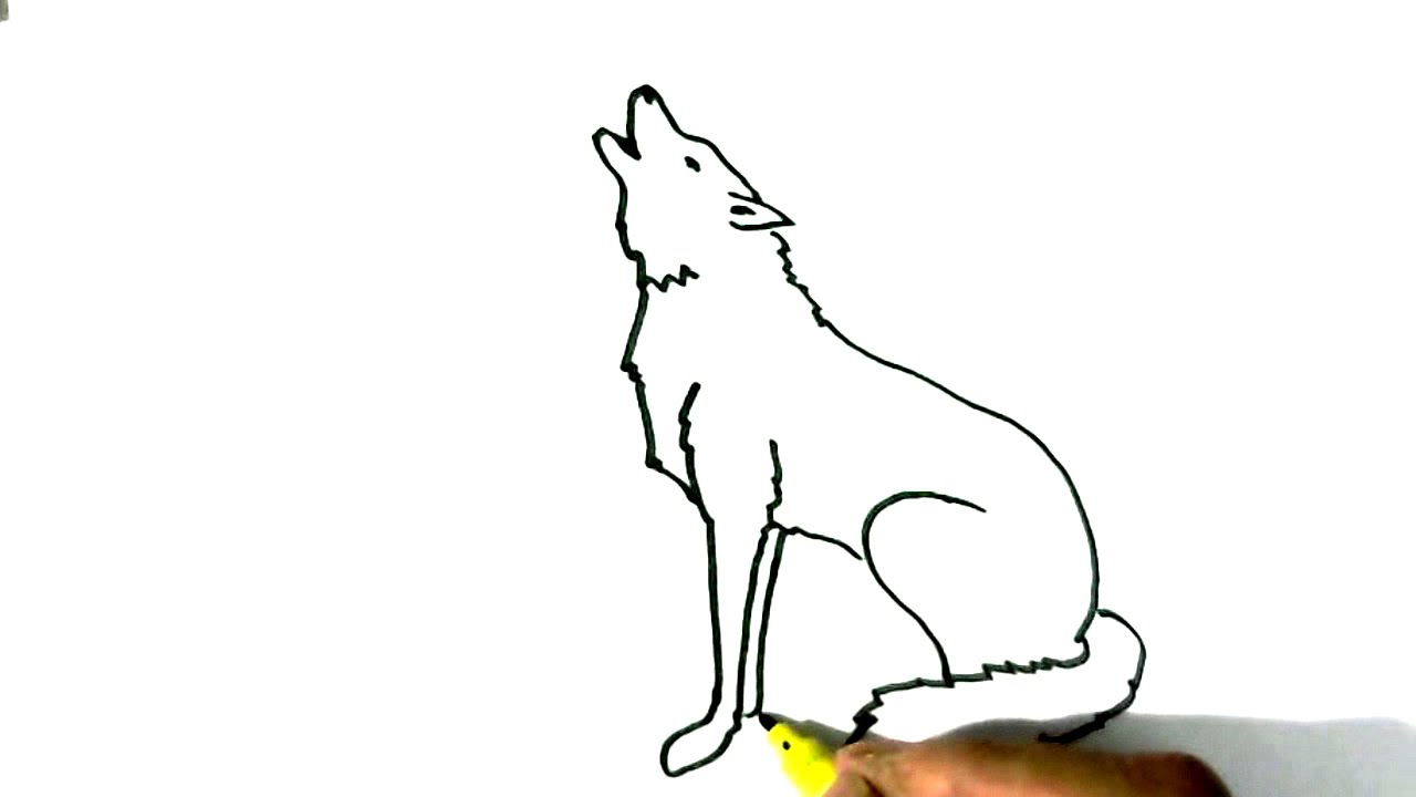 How To Draw Wolf Howling In Easy Steps For Children Beginners