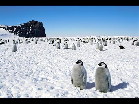 Как попасть в антарктиду на работу