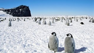 Как Живут в Антарктиде! Дух захватывает!
