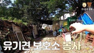 고프로8로 찍어본 유기견 보호소 봉사활동 (대전 천사의…