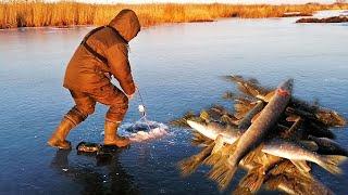 Рыбалка РАЗДАЧА Щуки на ЖЕРЛИЦЫ Лучшая Зимняя рыбалка в НОВОМ МЕСТЕ