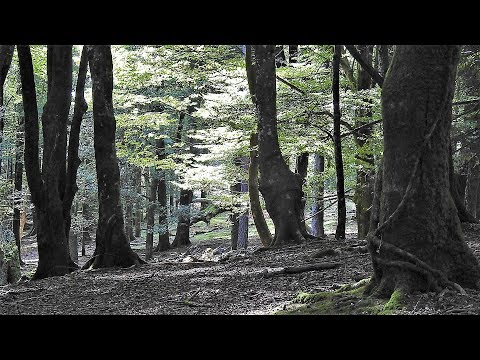 Artikutxa-The Basque Country´s Forest