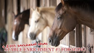 Stable Enrichment #1 + 3 DIY Enrichment Ideas