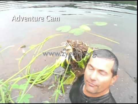 Eat the root: diving for yellow pond-lily