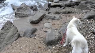 岬を蒔いてくると円月島が見えるところに小さな砂浜がありました。 大宮...