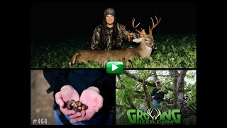deer-hunting-acorns-on-the-ground-equals-buck-and-does-down-464-growingdeer-tv