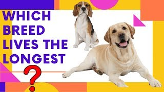 The 20 Dog Breeds That Live The Longest