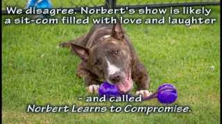 Norbert Holding Auditions Now, Adopted - Rspca Wacol, Qld
