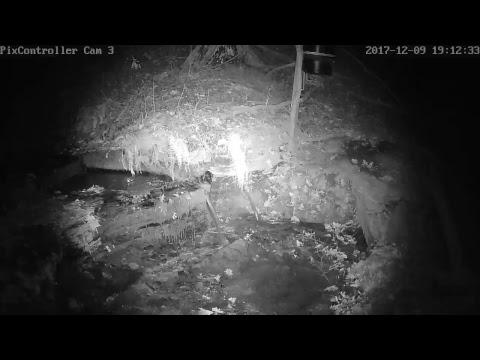 Wildlife Webcam 3 Live Stream