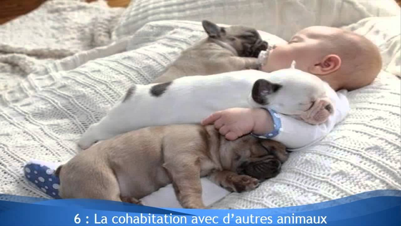 10 questions avant l 39 achat d 39 un chiot le bouledogue fran ais youtube. Black Bedroom Furniture Sets. Home Design Ideas