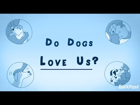 Inside A Dog's Brain: Do Dogs Love Us?