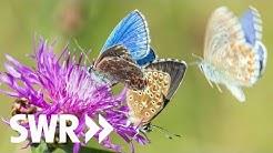Käfer, Biene Schmetterling – Natur faszinierend und bedroht | Geschichte & Entdeckungen