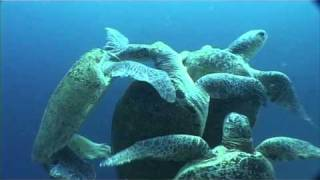Amazing animal sex - Turtle orgy!