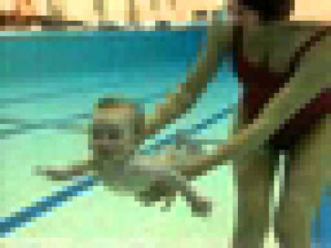 Swimming Babies Youtube