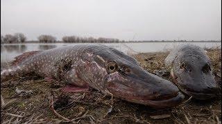 За судаком и щукой. Открытие сезона 2018. Рыбалка в Астраханской области.