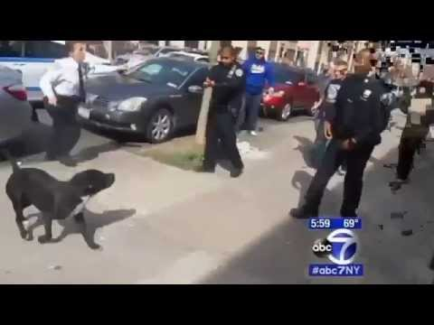 Trigger-Happy Police Officer Shoots At Dog In Brooklyn Crowd After Failed Arrest