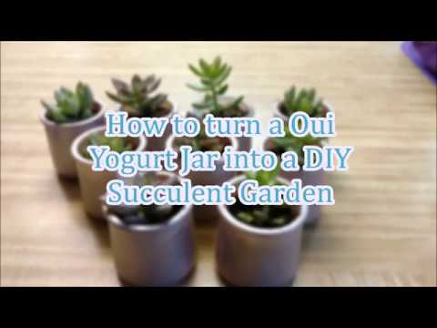 Diy Oui Yogurt Jar Succulent Project Youtube
