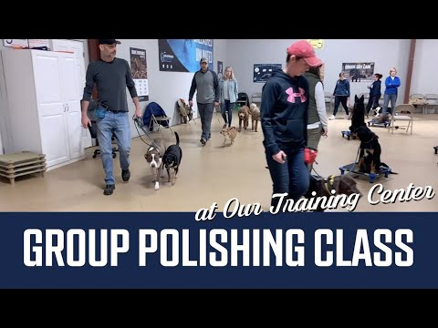 Dog Training in Group Polishing Class at Unleashed Unlimited