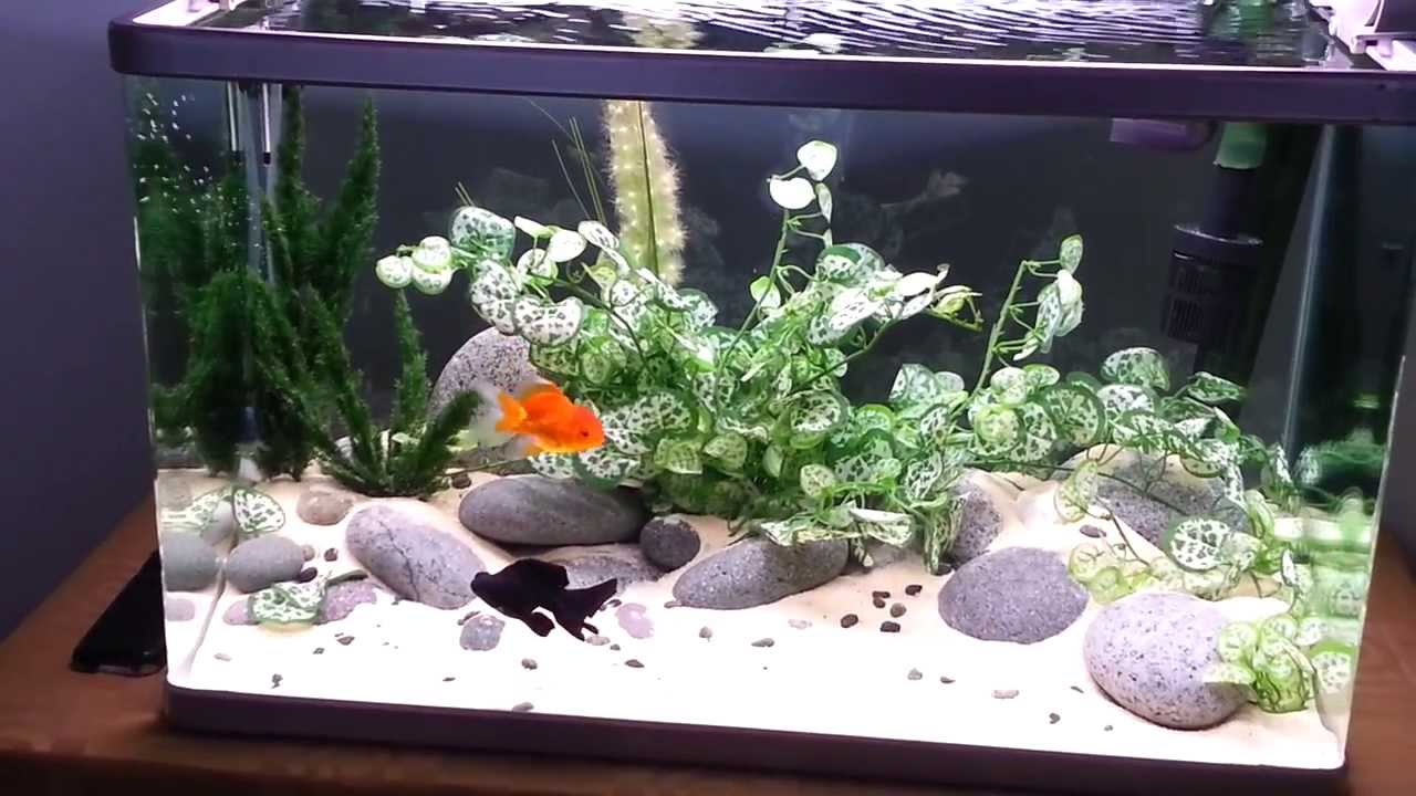 Aquascape goldfish tank youtube for Aquarium decoration for goldfish