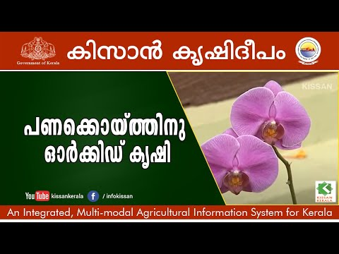 Success Story On Commercial Orchid Cultivation By Sri. Ajith, Trivandrum-598