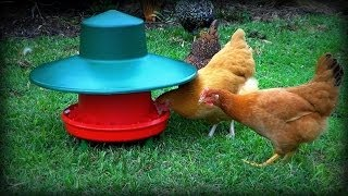 Waterproof Free-range Chicken Feeder & Rain Test