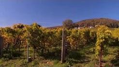 Pfälzer Weinsteig Etappe 10 Klingenmünster - Bad Bergzabern