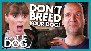 Can Victoria Stop Owner Breeding his Troublesome German Shepherd? | It's Me or The Dog