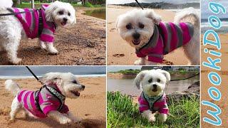 Dog Music Adventure  Malshi Dog Lagoon Run, Wookidog | 4K Dog Walking Video