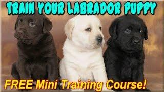 ☼ ☼ ☼  How To Train A Labrador Retriever  Puppy ♥ START NOW ♥ How To Train Labrador Retrievers √ √ √