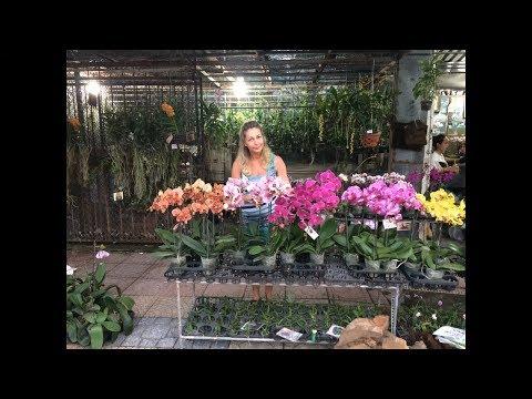 Орхидеи во Вьетнаме Нячанг. Магазин орхидей.