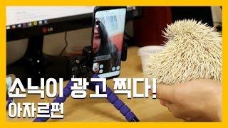 소닉이의 첫 광고 촬영-아자르편 [냥이아빠] thumbnail