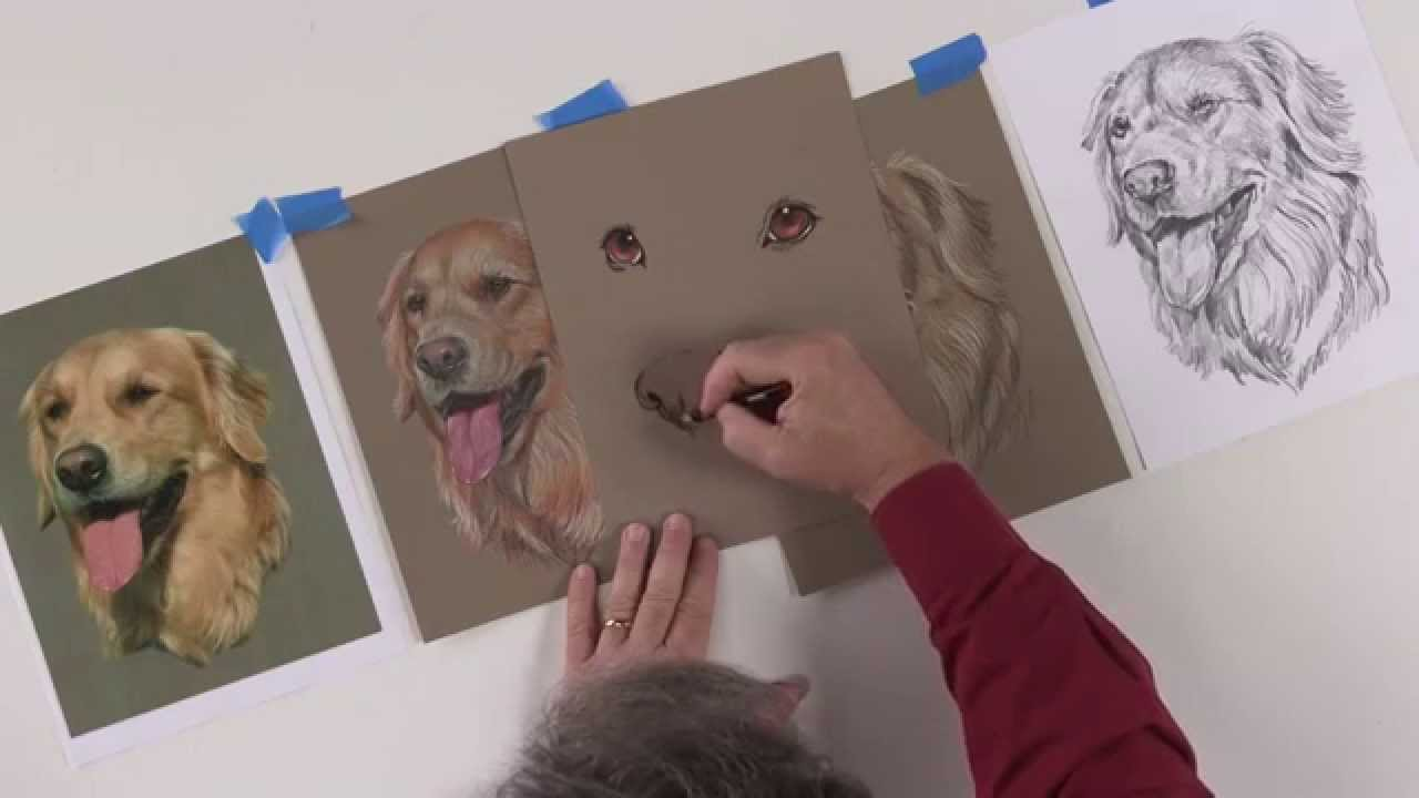 Learn How To Draw A Dog's Nose In Colored Pencil