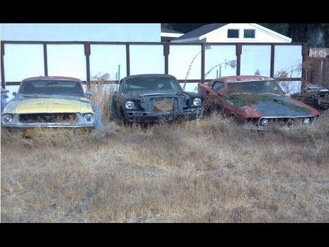 Yard Find Mustangs ! 1969 Mach 1 428 SCJ, 1968 S Fastback, 1965 A