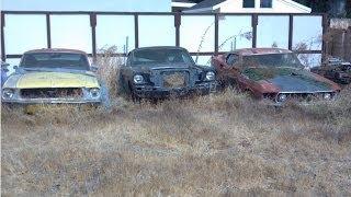 Yard Find Mustangs ! 1969 Mach 1 428 SCJ, 1968 S Fastback, 1965 A Fastback, 1969 Convertible