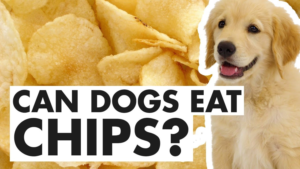 Can Dogs Eat Chips - YouTube