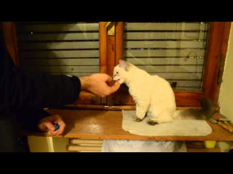 Hercules & Antares and the Cat Clicker Training: Episode XII