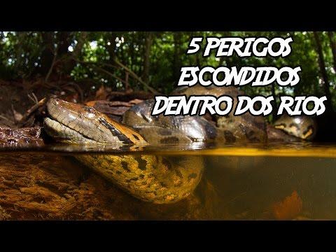 5 Perigos Escondidos Dentro Dos Rios