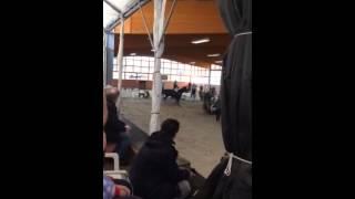 Stil A** Donnie (Leichlingen- Witzhelden 15.03.2015)
