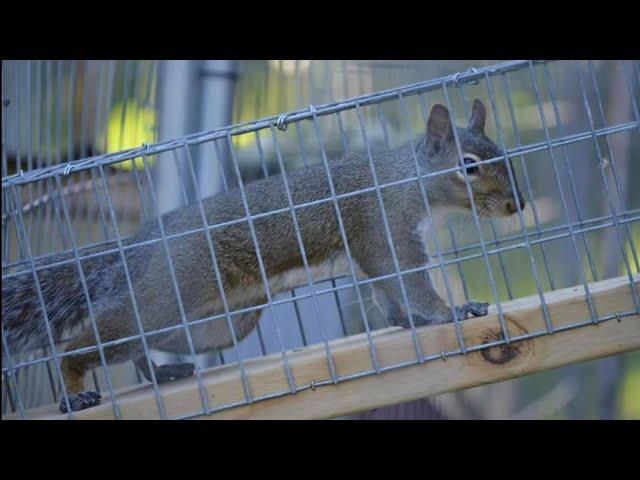 Meet Liv the squirrel