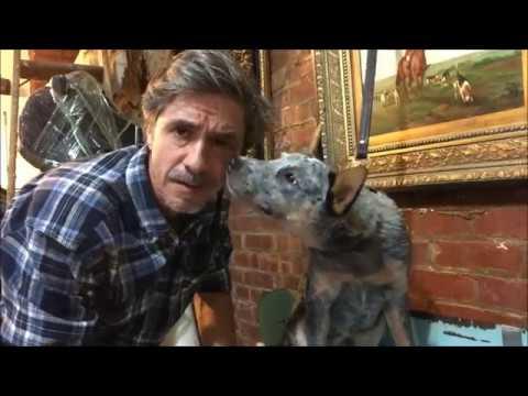 Hardest Dog Training Command, Hold, Drop, Retrieve