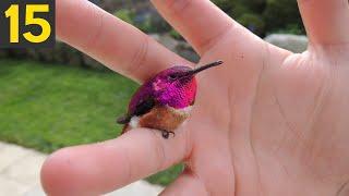 15 RAREST BIRDS In The World