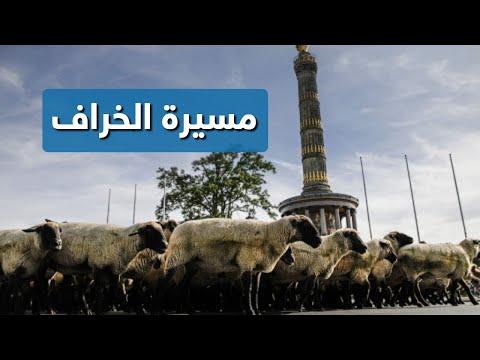 مسيرة خراف مع رعاتها في برلين  - نشر قبل 15 دقيقة