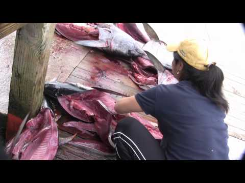 "Fishing Capital of the World, ""Butchering Yellow Fin Tuna"", Venice Marina, Louisiana"